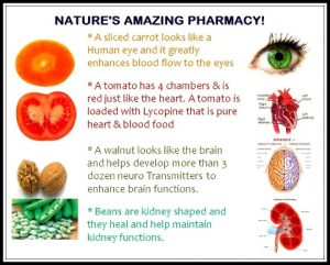 Christian Natural health & healing, Certified health coach, naturopathy, practitioner, Bible